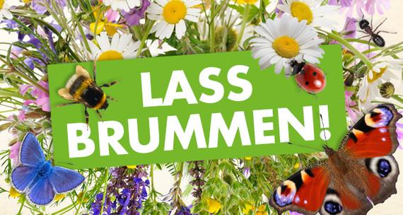 Lass brummen! Eine Zukunft für Insekten