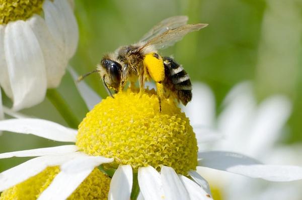 Fairpächter gesucht Neues Beratungsangebot für mehr Natur in der Landwirtschaft