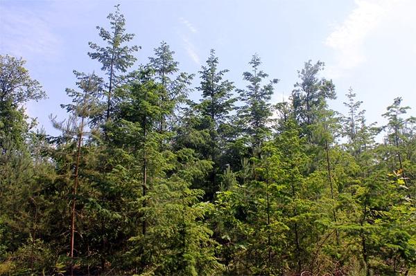 Für mehr Licht und Wasser Ökologischer Waldumbau am brandenburgischen Wittwesee