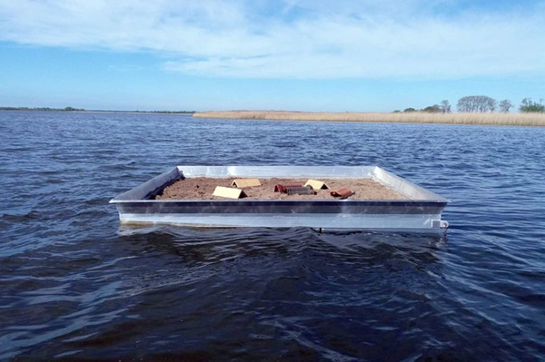 Reif für die Insel Neue Brutinsel für Flussseeschwalben auf Gülper See