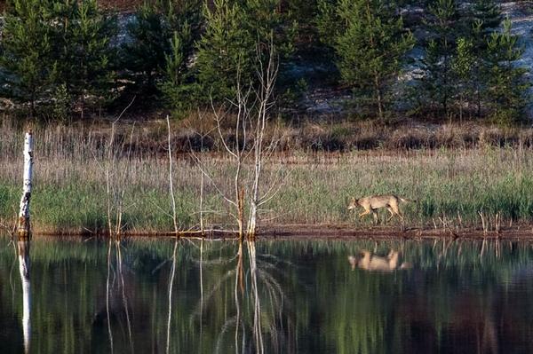 Unterwegs auf Wolfspfaden Herzliche Einladung zur Exkursion im Naturparadies Grünhaus