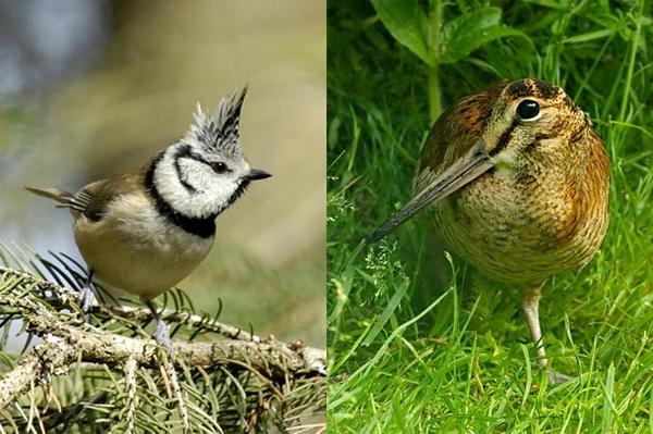 Jetzt wird's bunt Vogelwelt in Grünhaus wird vielfältiger