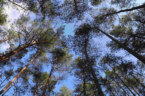 Brandenburger Wildnis vernetzen Wald bei Finsterwalde als Trittstein für die Natur gesichert