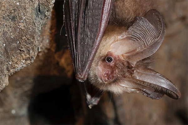Ab in den Winterschlaf NABU-Stiftung sichert Winterquartiere für Fledermäuse
