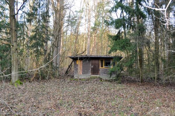 Frühjahrsputz im Wald Waldumbau in Stiftungsgebieten in Ostbrandenburg