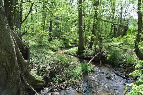 """Die """"Hölle"""" als Naturparadies gesichert Naturwald im Stobbertal für die Natur gesichert"""