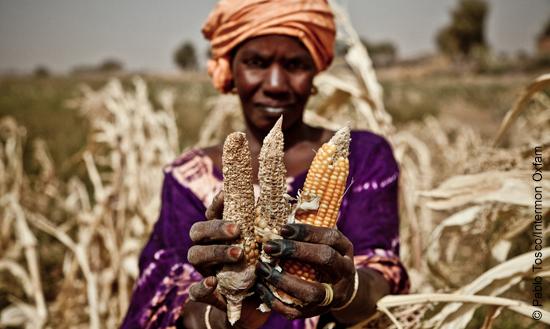 Die Folgen des Klimawandels treiben immer mehr Menschen in den Hunger.