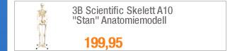 "3B Scientific Skelett                                             A10 ""Stan""                                             Anatomiemodell"