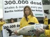 Greenpeace Campaignerin A. Cederquist hält einen toten Schweinswal.